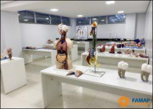 Lab. Anatomia